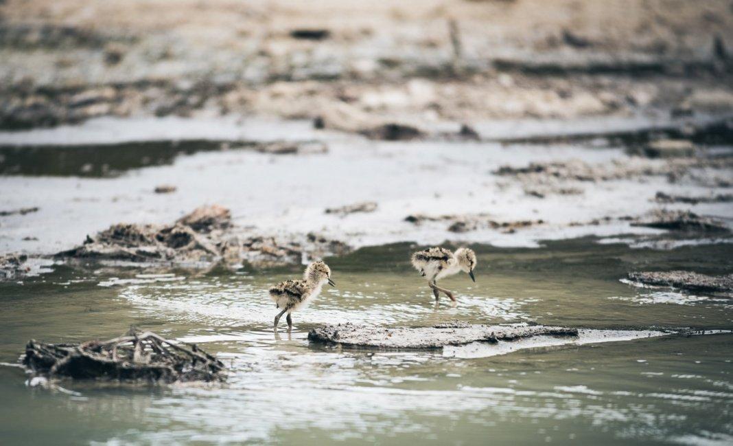Rotorua birds