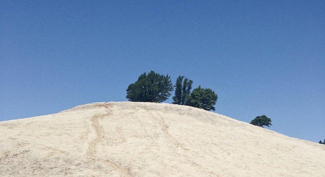 Trail Running on Mount Tamalpais - Trail & Kale
