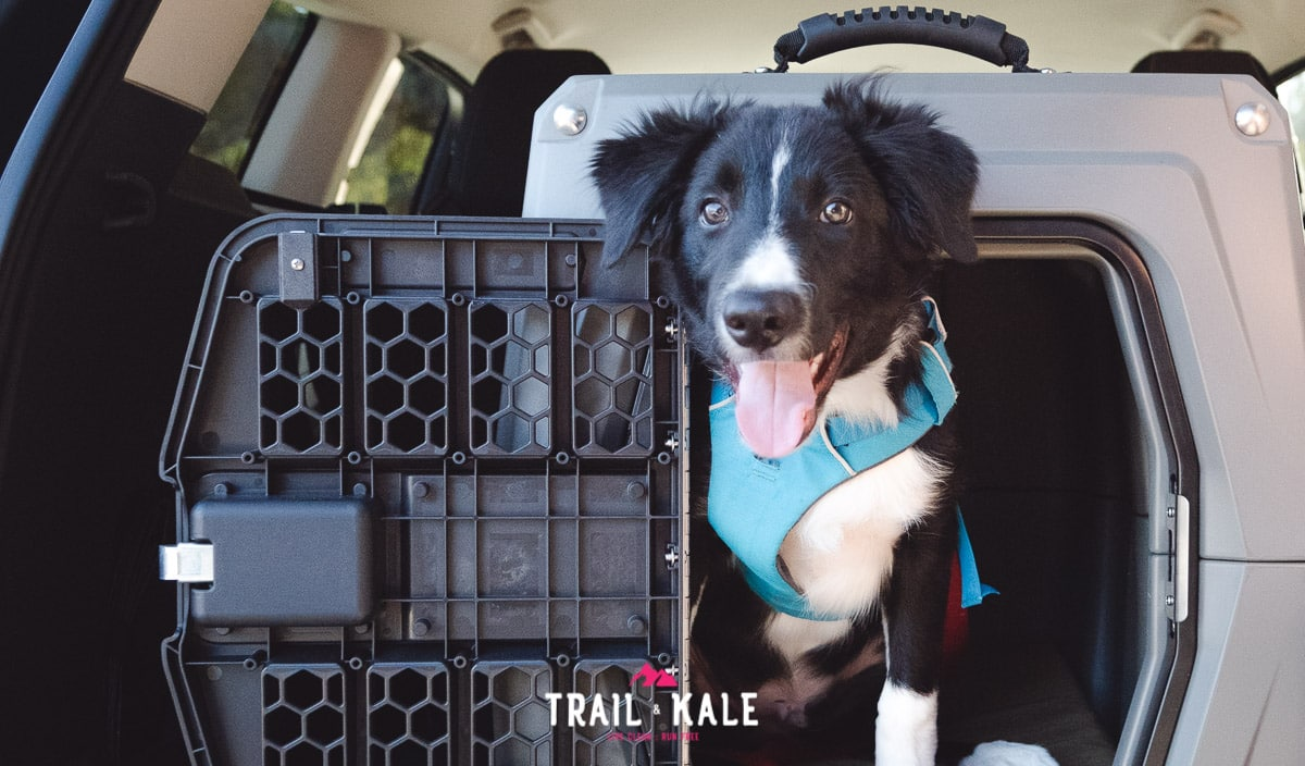 Gunner Kennels G1 Review trail and kale wm 10