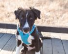 Ruffwear Front Range Harness Review: Sizing, Comfort and Durability