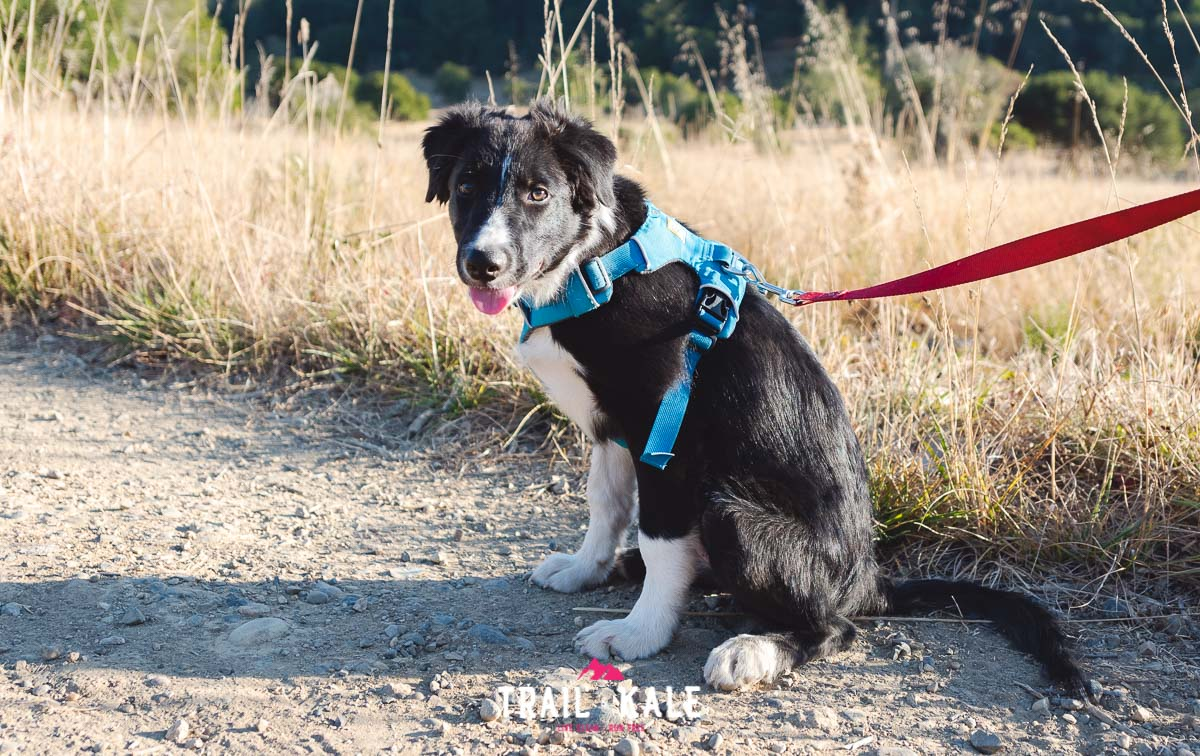 Ruffwear Front Range Harness review trail running trail and kale wm 7