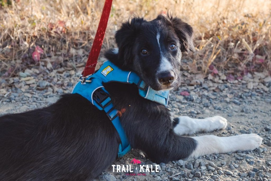 Ruffwear Front Range Harness review trail running trail and kale wm 9