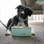 YETI Boomer Dog Bowl Review trail dogs trail and kale lrg 1
