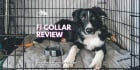 Fi Dog Collar Review 2020: Is It The Best GPS Smart Dog Collar?