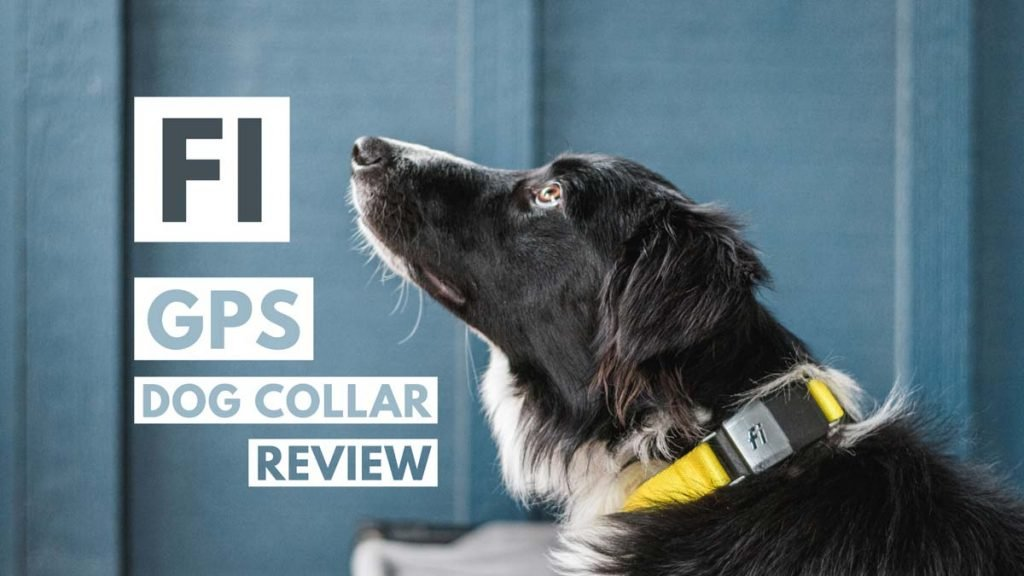 Fi Dog Collar Review trail and kale