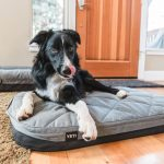 YETI Dog bed review trail and kale IG 25 Featured