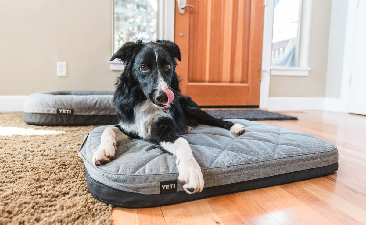YETI Dog bed best dog beds trail and kale