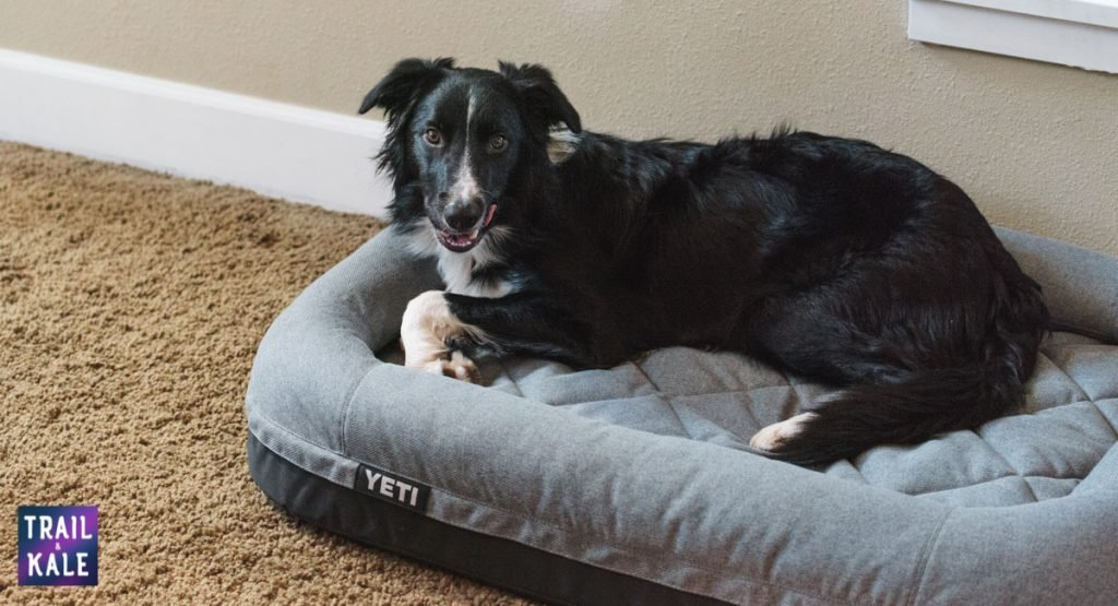 YETI Dog bed review trail and kale web wm 5