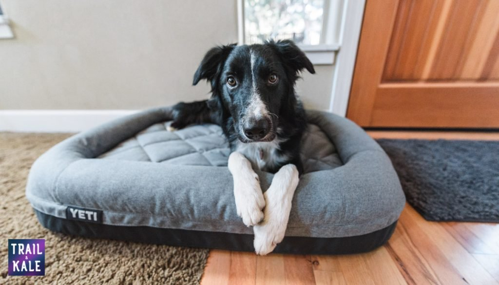 YETI Dog bed review trail and kale web wm 7