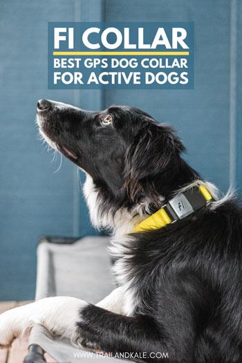 Best GPS Dog Collar 1