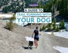 Trail Running With Your Dog: Tips, Safety, Handling the Heat & Dog Running Gear