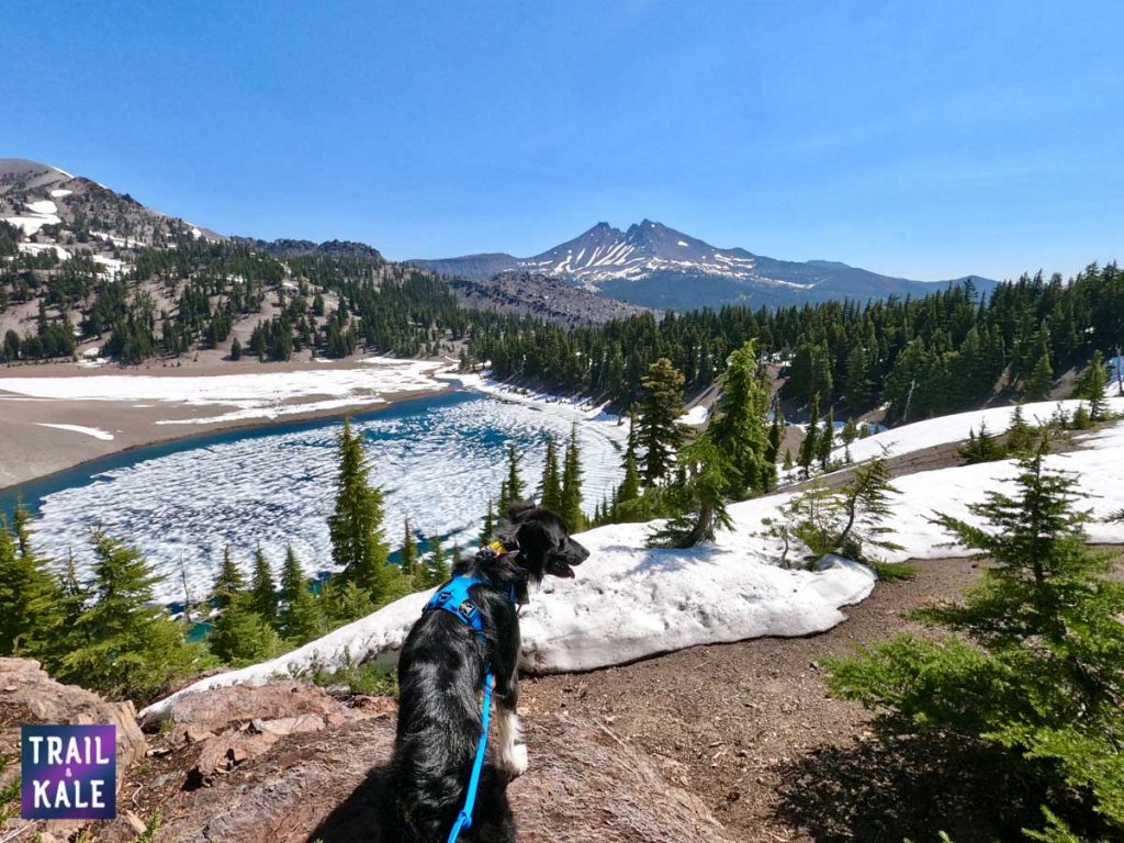 trail running with your dog trail and kale web wm 10