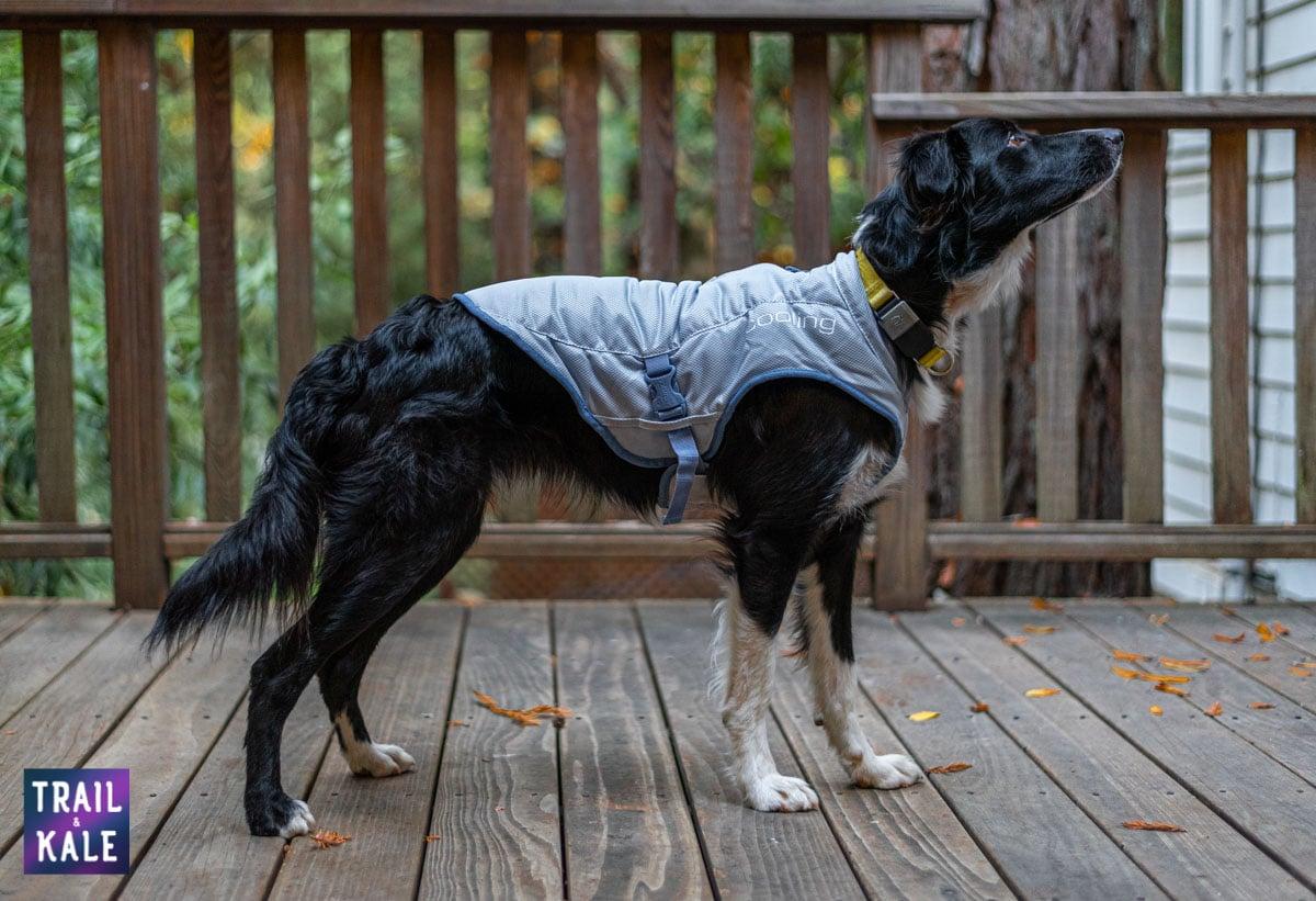 Kurgo Cooling Vest Review Trail kale web wm 10