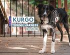 Kurgo Townie Harness Review: A Customizable Harness for Adventure Dogs