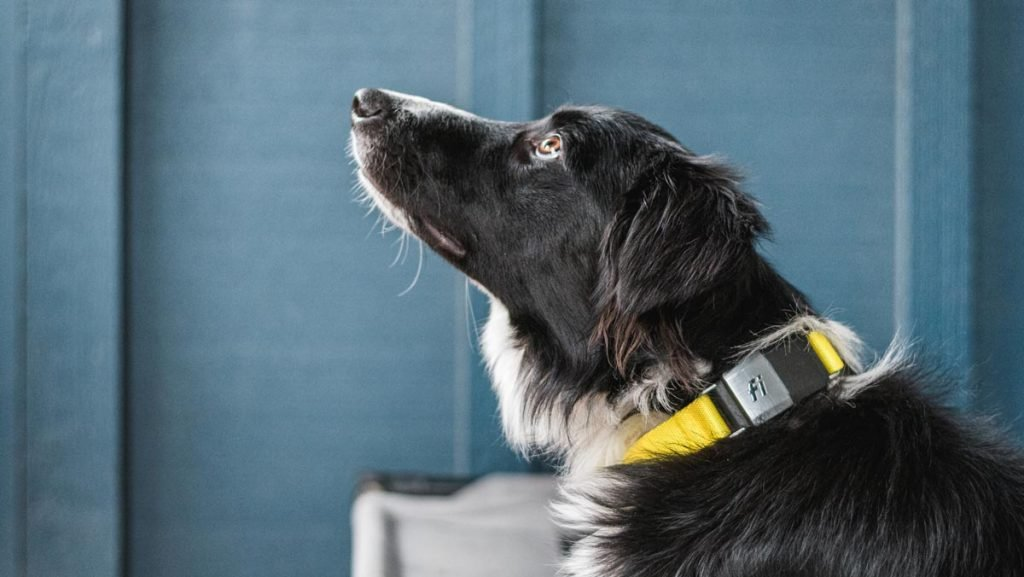 Fi Dog GPS Collar Black Friday trail and kale IG 1