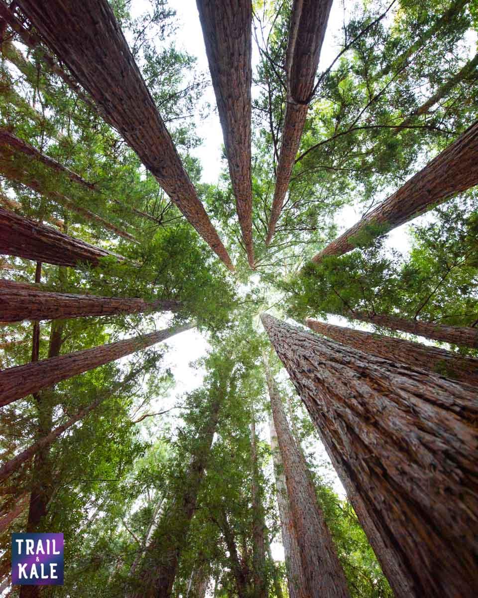 PrAna trail and kale web wm 6