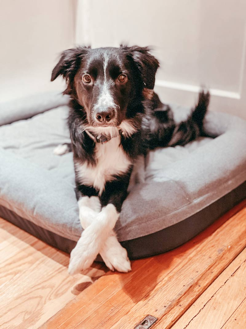 Kepler on his YETI Dog Bed how to calm your dog down after exercise