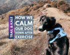 How To Calm Your Dog Down After Exercise