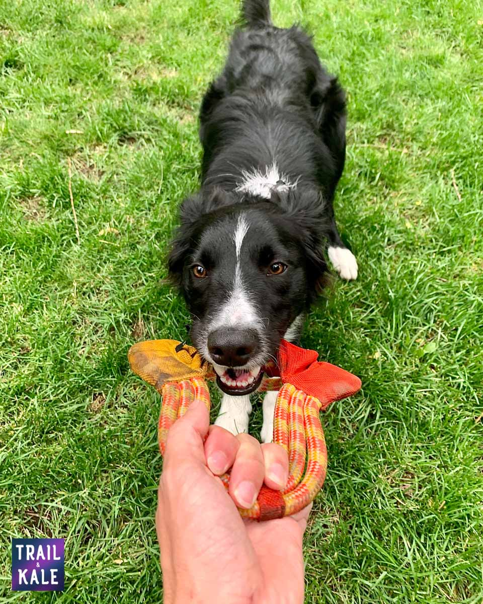 Best Dog Frisbees Border Collie Flying Disc trail and kale web wm 1