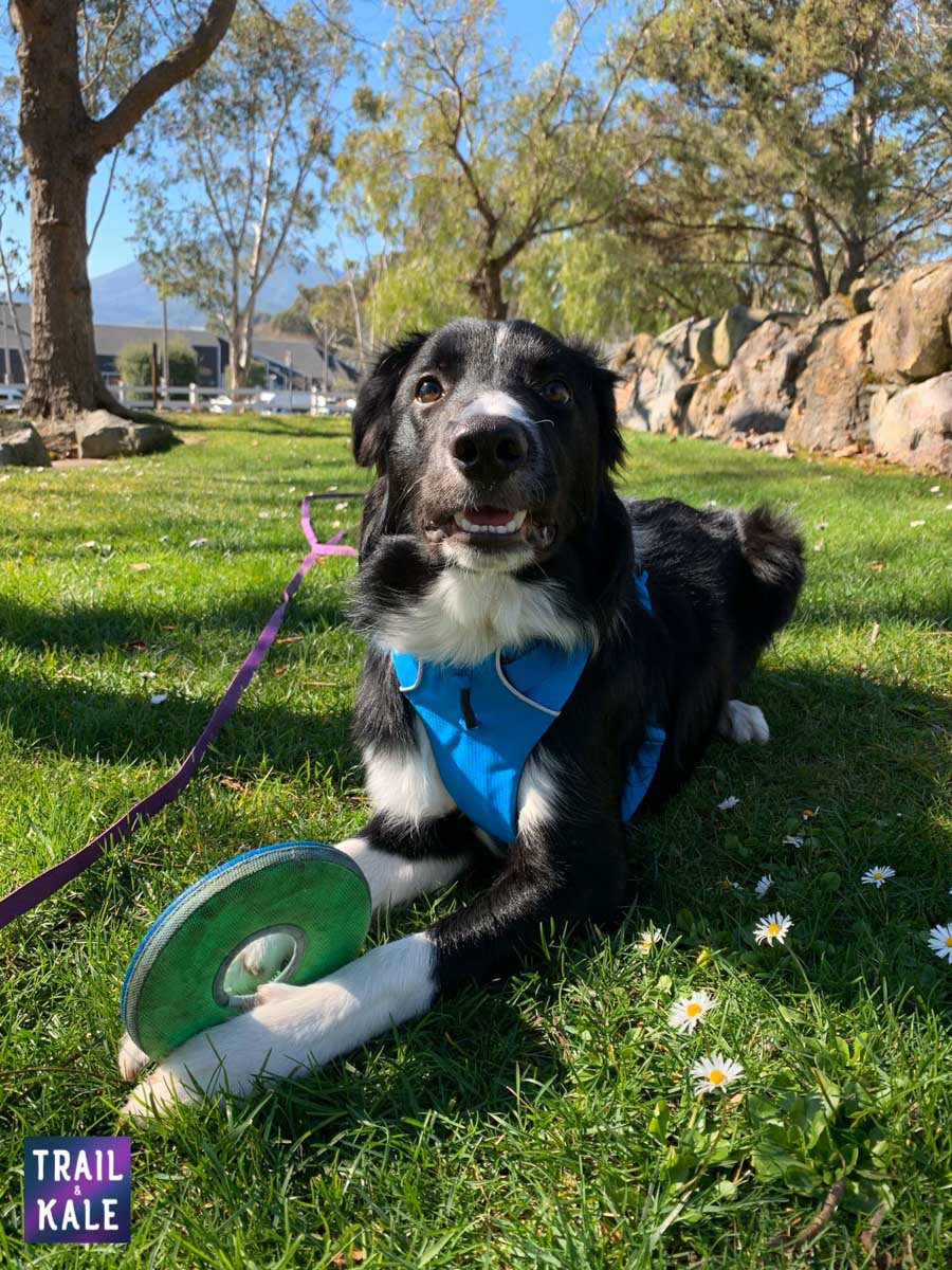 Best Dog Frisbees Border Collie Flying Disc trail and kale web wm 3