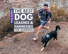 The Best Harnesses and Leashes For Running With Your Dog