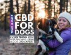 CBD For Dogs: Everything You Wanted To Know About Dog CBD, From An Expert