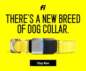 Fi GPS Dog Collar