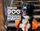 Best Dog Backpacks For Hiking With Your Dog