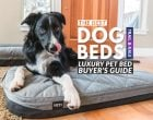 The Best Dog Beds Buyer's Guide