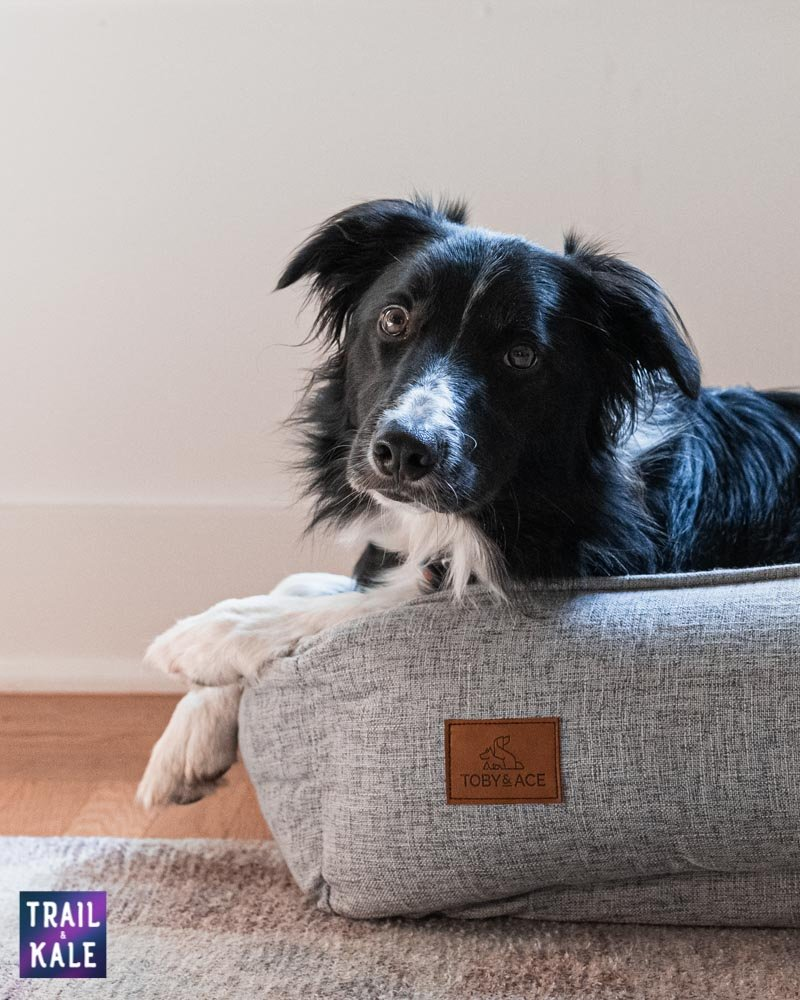 Toby and Ace Buddy Dog Bed Review Trail and Kale web wm 16