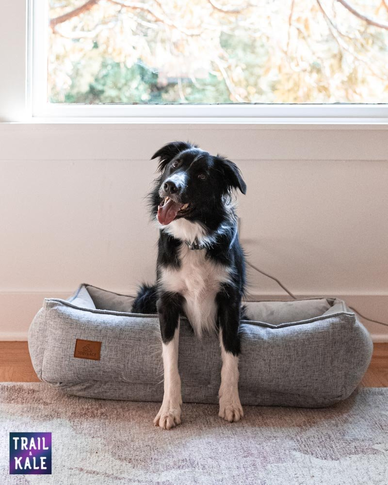 Toby and Ace Buddy Dog Bed Review Trail and Kale web wm 17