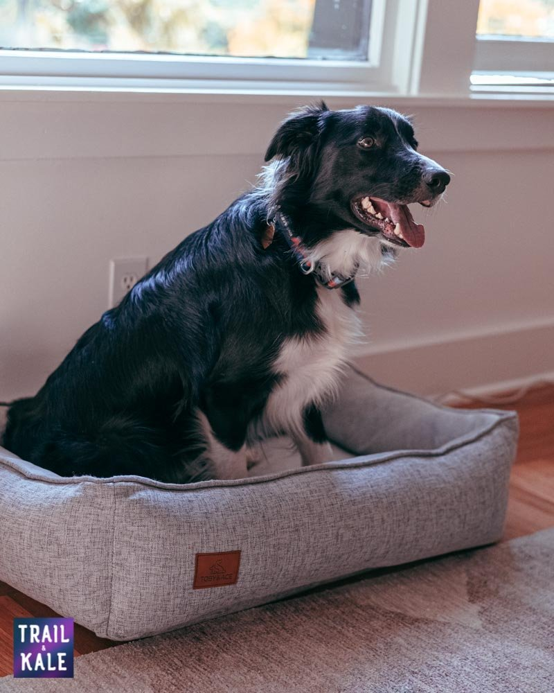 Toby and Ace Buddy Dog Bed Review Trail and Kale web wm 6