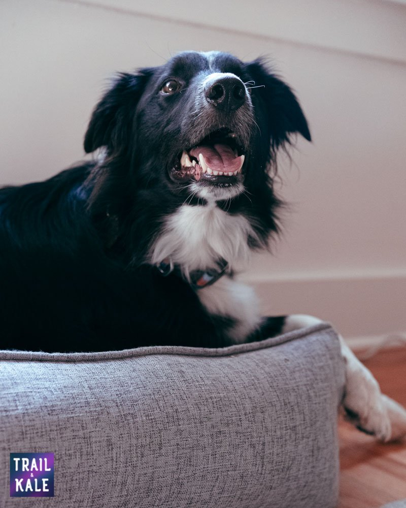 Toby and Ace Buddy Dog Bed Review Trail and Kale web wm 8